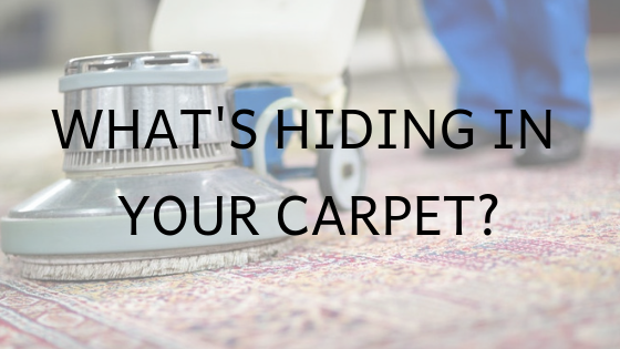 what's hiding in your carpet_blog image